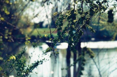 Photos gratuites de arbre, aube, branche, brillant