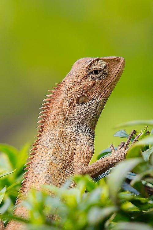Ilmainen kuvapankkikuva tunnisteilla eksoottinen, eläin, eläintarha, gekko