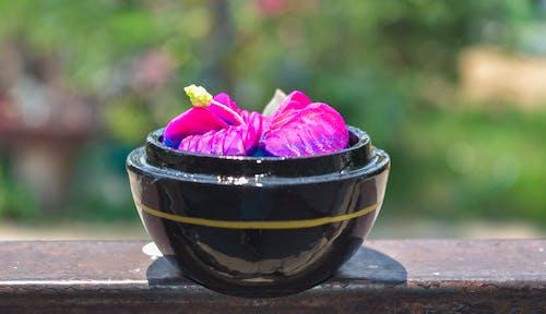 Pink Flower in Black Bowl