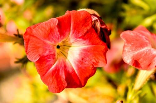 Free stock photo of beauty, bloom, blossom, bright