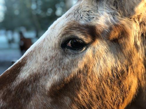 Foto profissional grátis de cabeça de cavalo, cavalo
