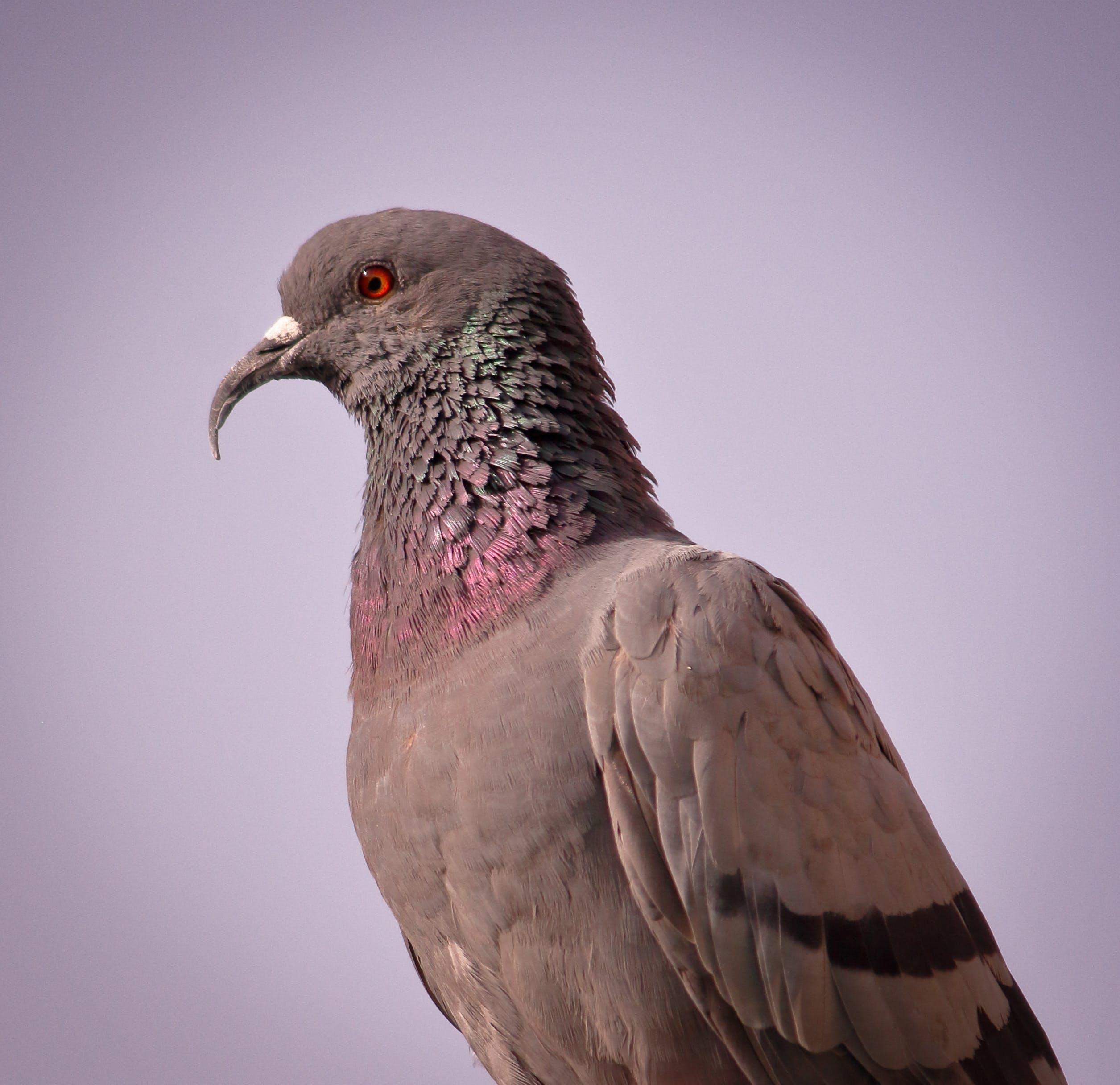 Foto d'estoc gratuïta de #photography #photooftheday #photographyislife #ph, #pigeonmurah #pigeonfeedingset #pigeonindonesia #p