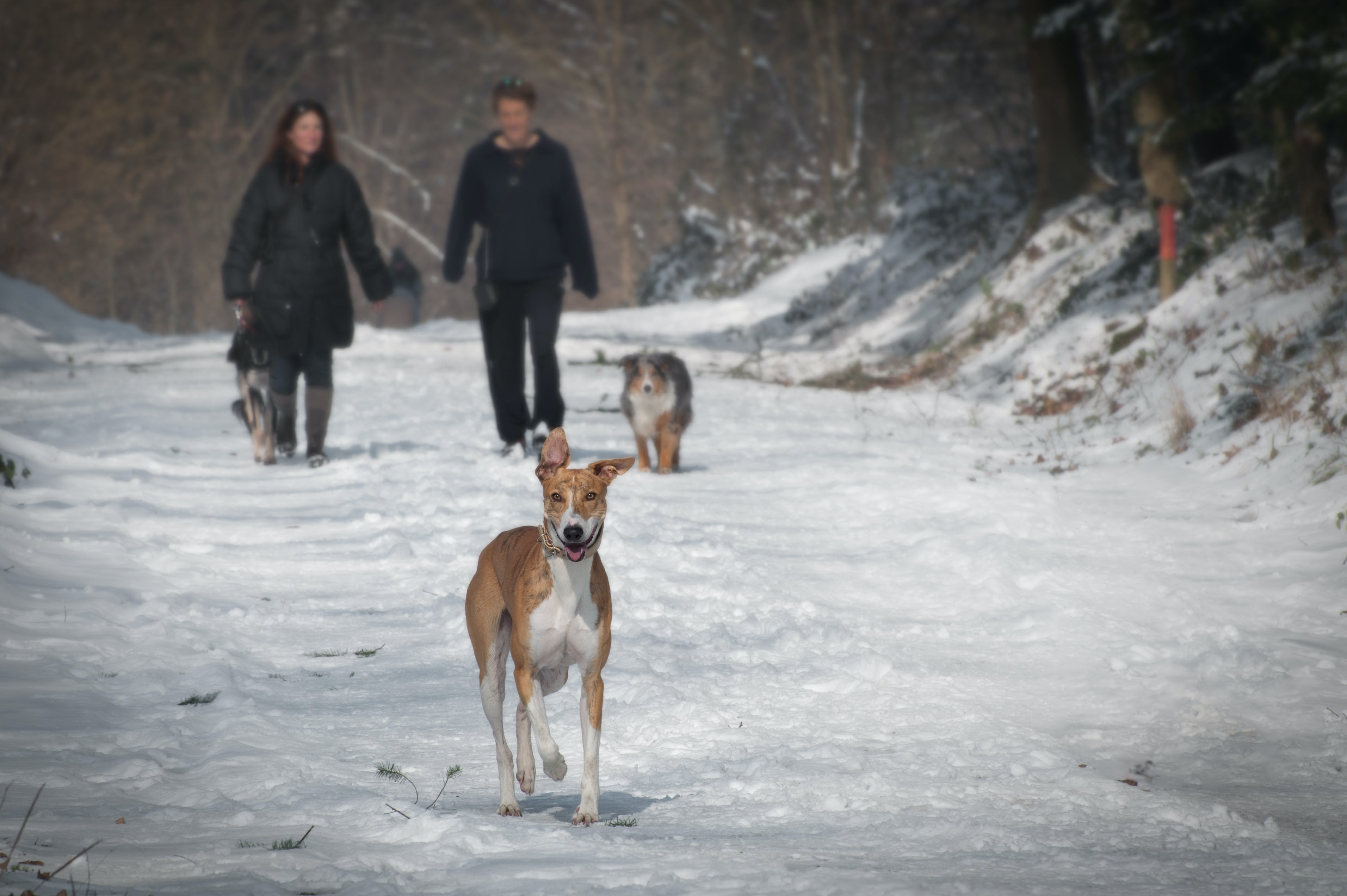 2 Person and 2 Dog Walking in the Snow during Daytime