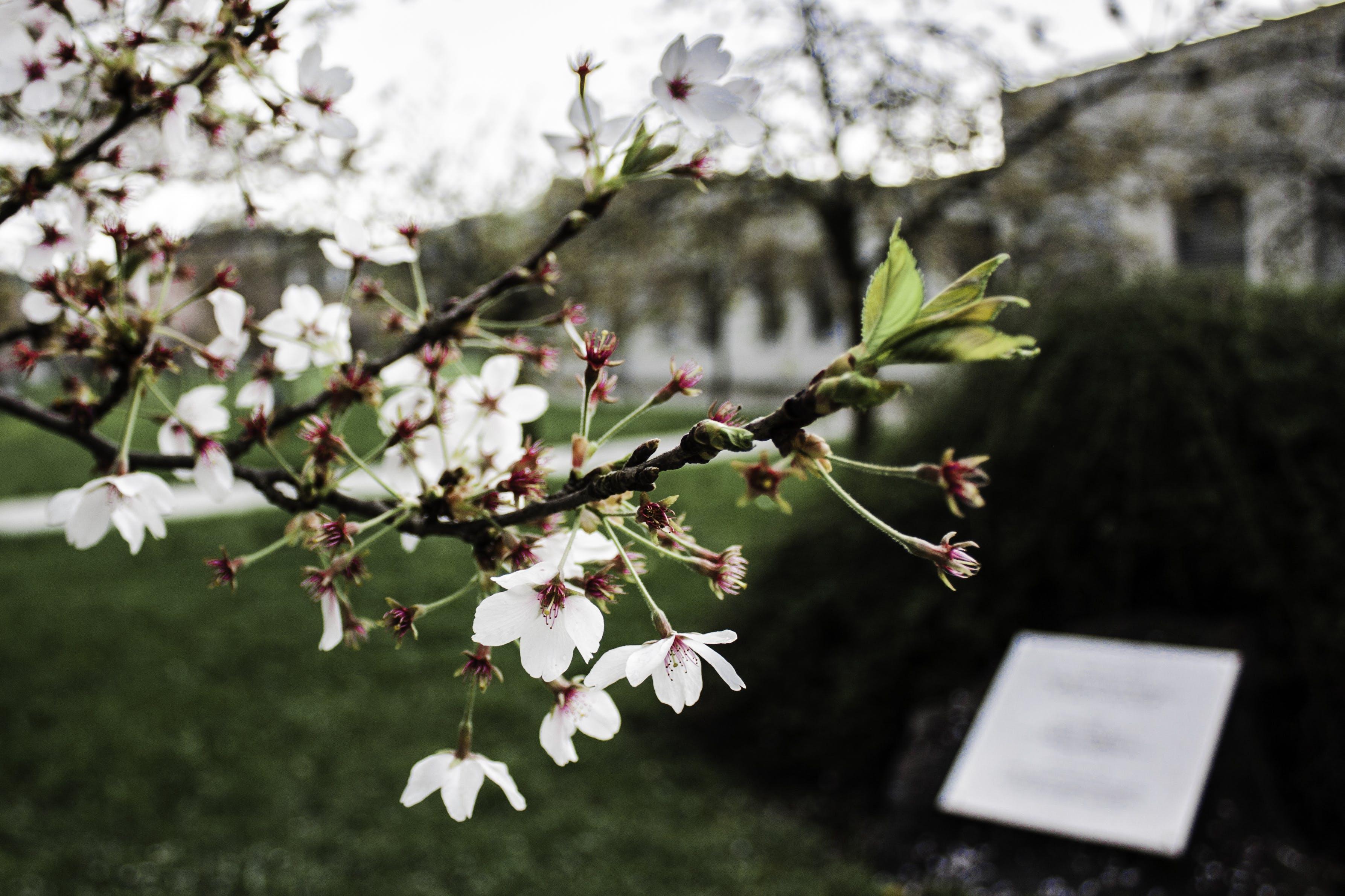 Fotos de stock gratuitas de árbol, blanco, bonito, brillante