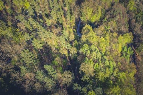Foto profissional grátis de árvores, cênico, floresta, natureza