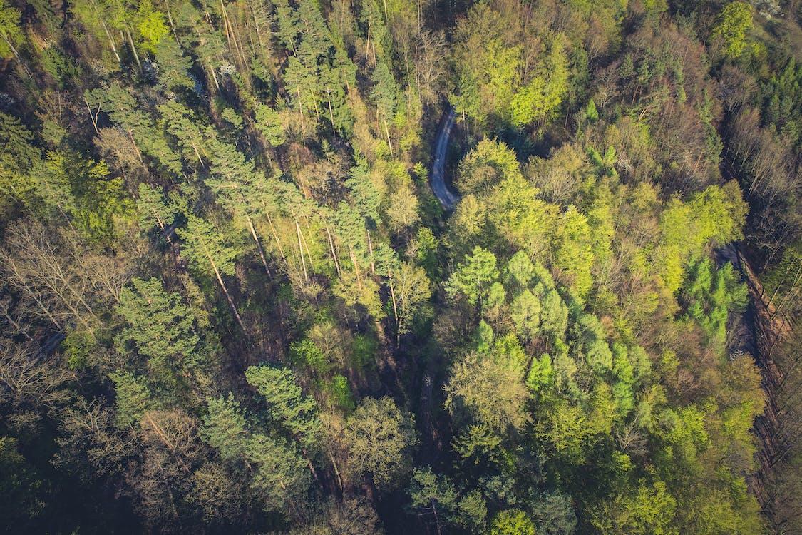 árvores, cênico, floresta