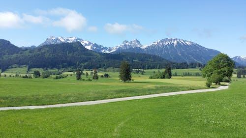 Foto d'estoc gratuïta de arbres, cel, herba, muntanyes