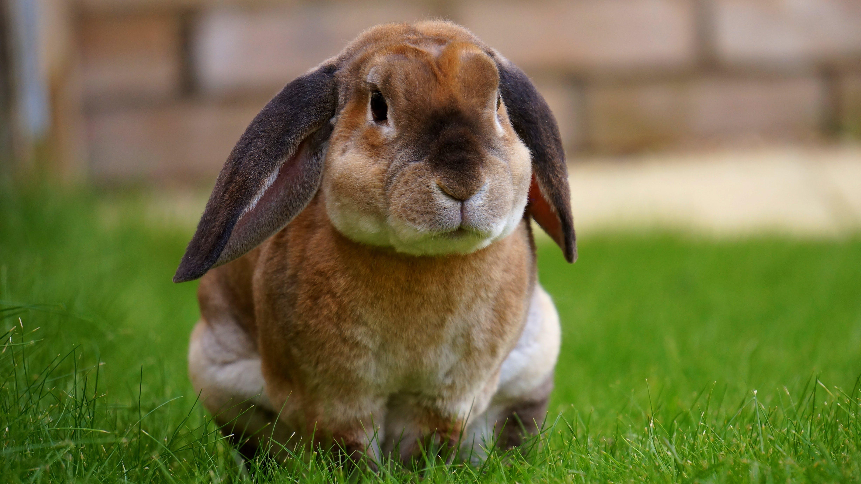 Beige Rabbit Resting on Green Grasses during Daytime