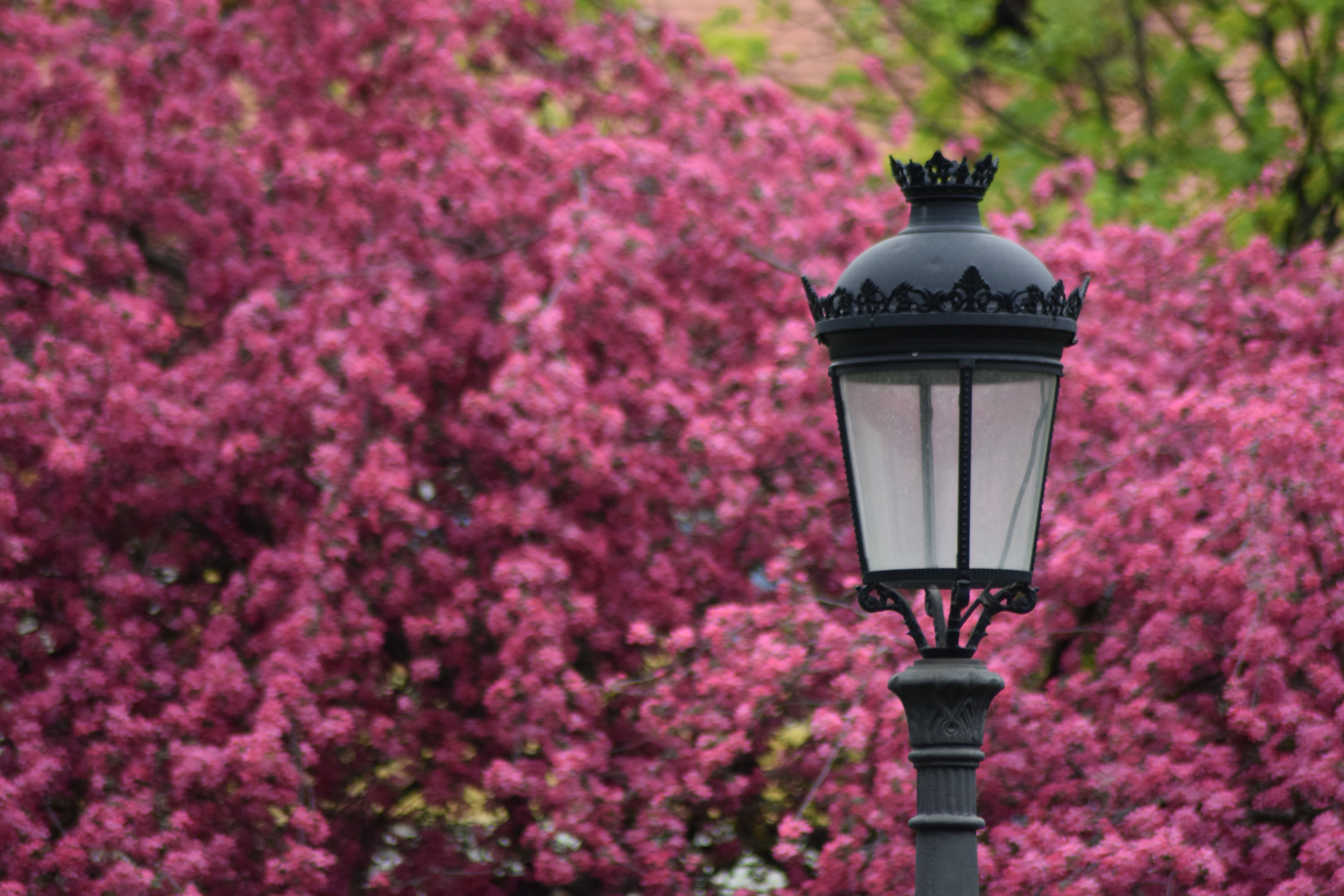 Selective Focus Photography of Black Lamp Post