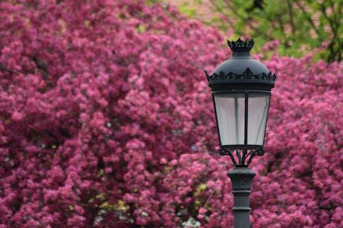 Бесплатное стоковое фото с лампа, лепесток, лето, почта