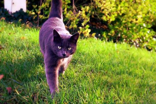 Gratis arkivbilde med dyr, grønn, katt, svart katt