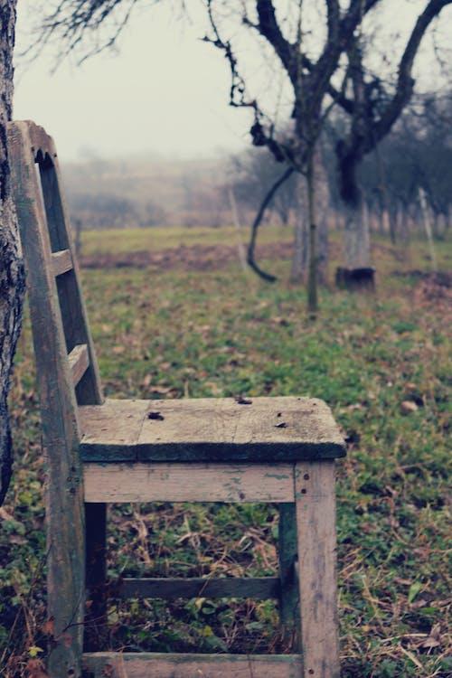 Gratis arkivbilde med #gamle minner, #stol, retro, trestoler