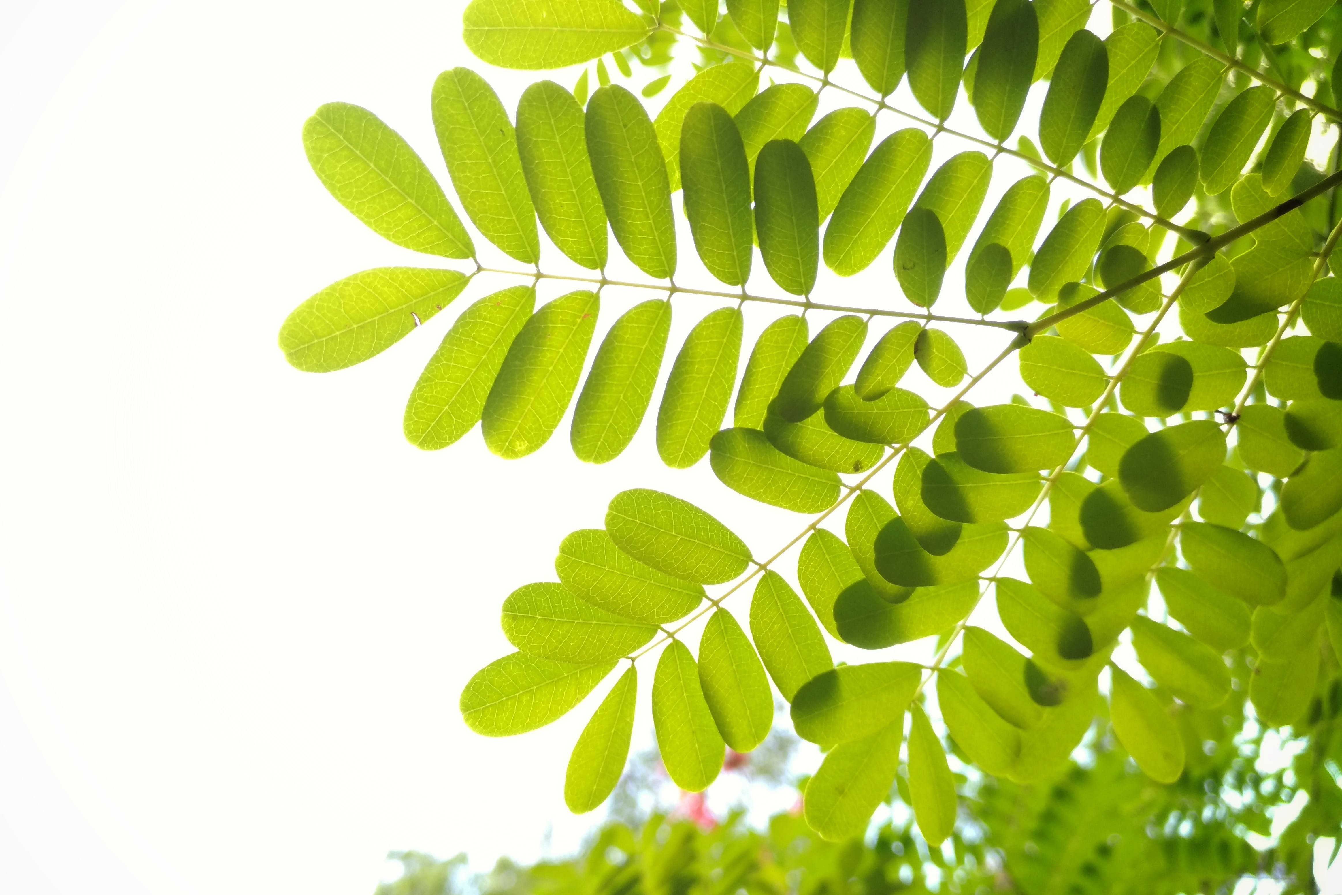 Green Leafed Leaves