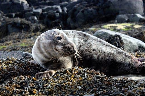 Foto profissional grátis de #animais selvagens, foca