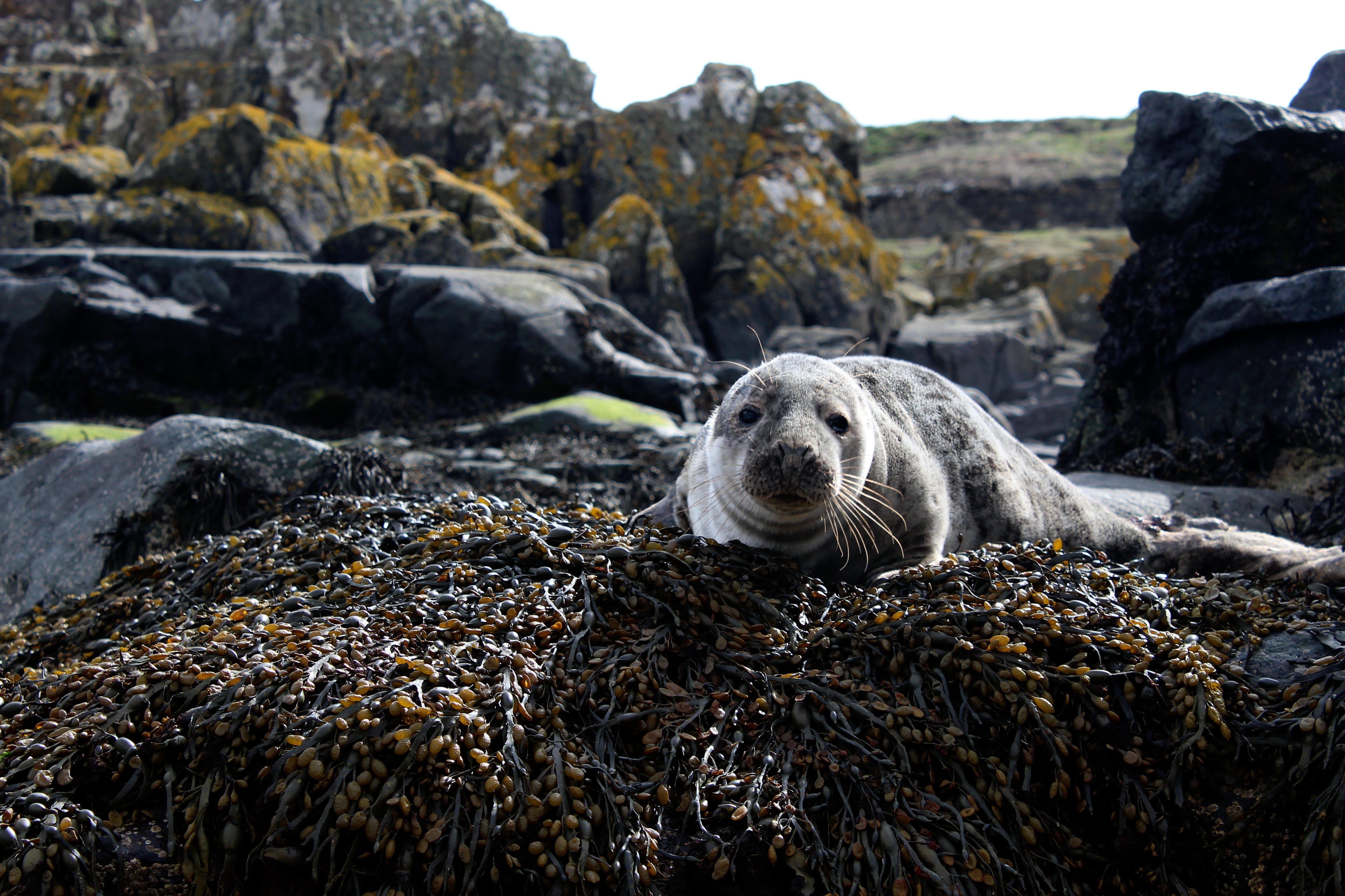 Closeup Photo of Sea Lion on Brown Rock