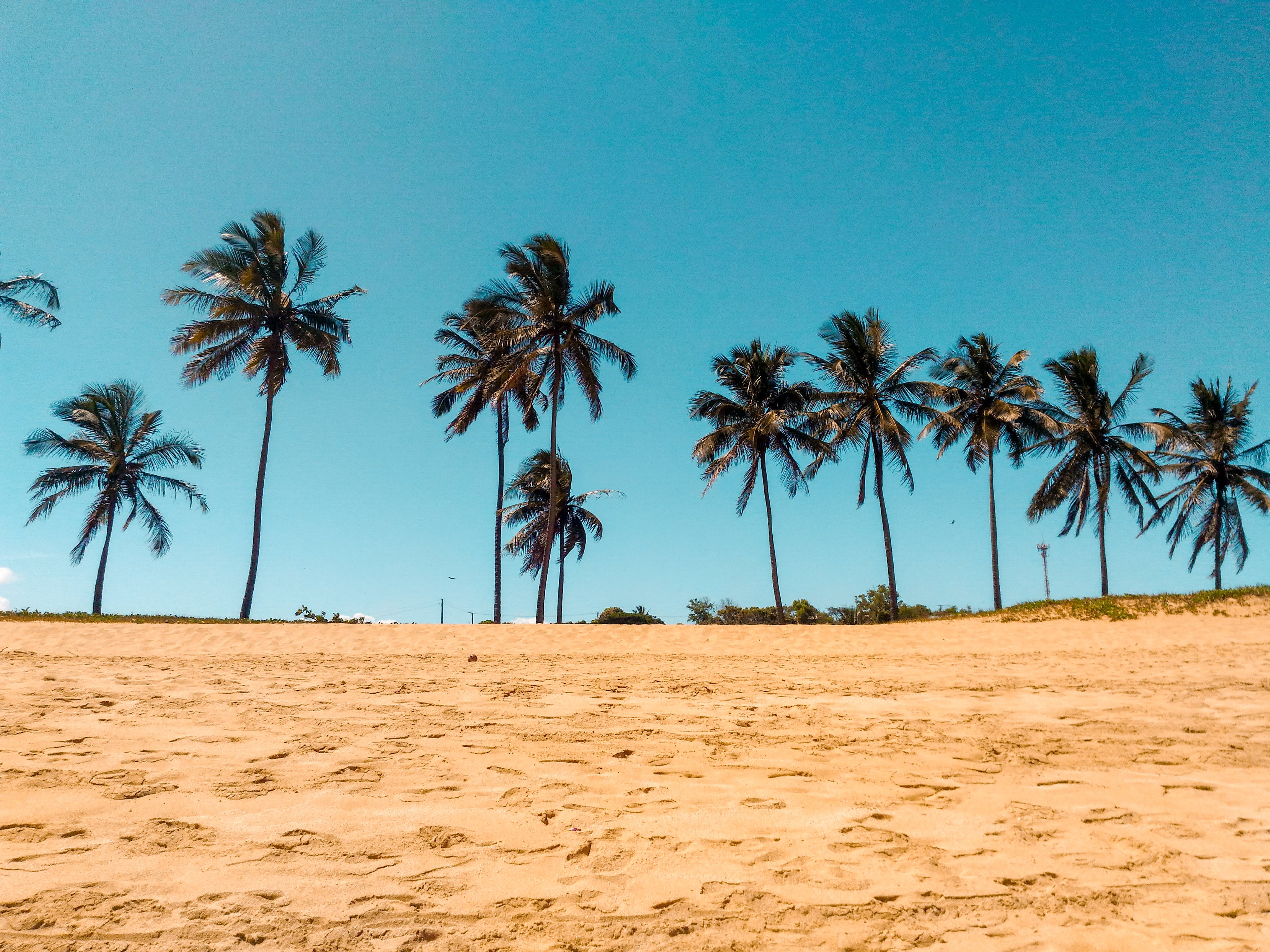 Coconut Trees on Brown Sand