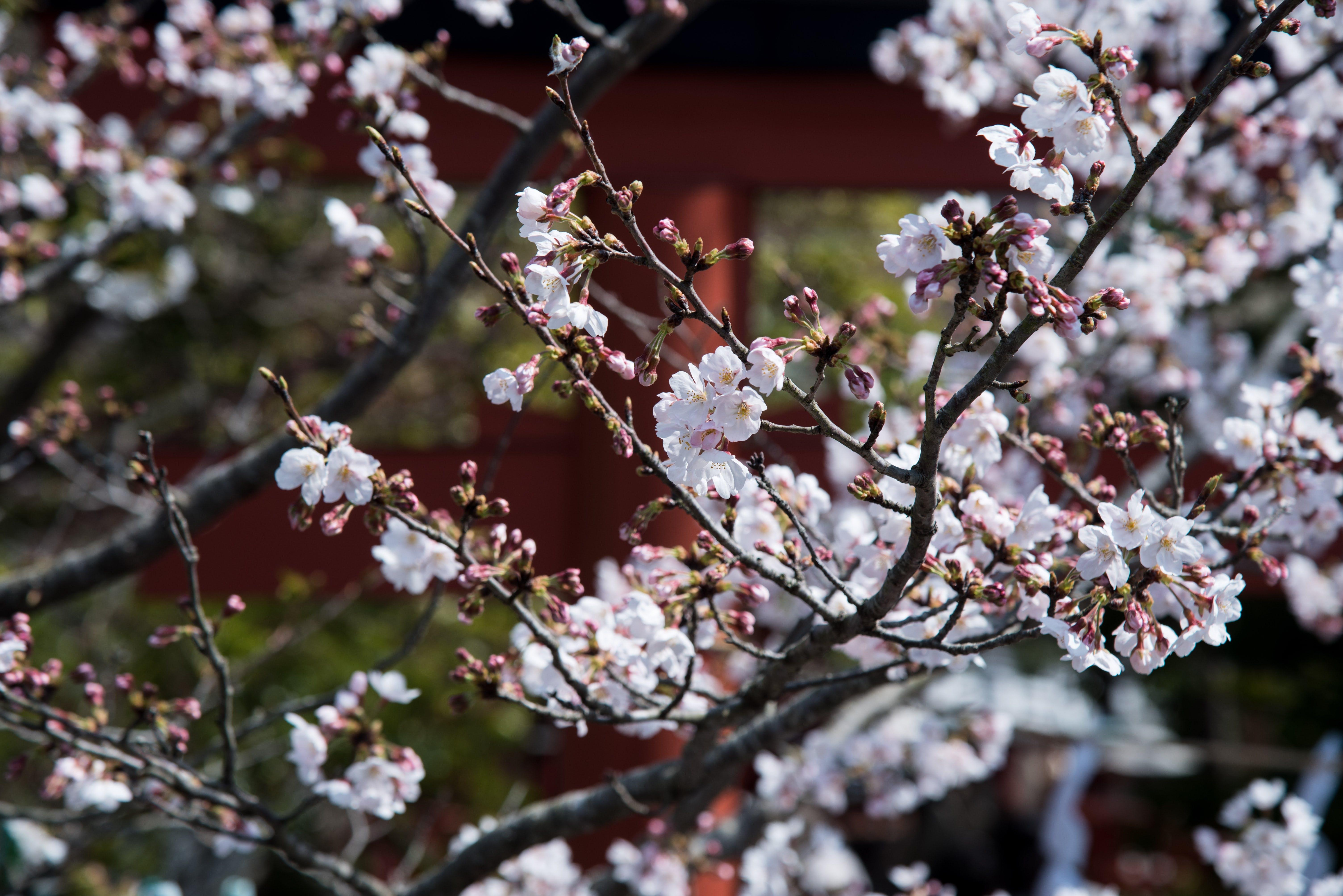 Macro Photography of White Flowers