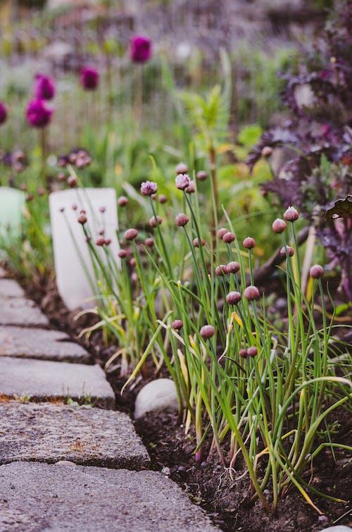 alan, Bahçe, bitki örtüsü, bulanıklık içeren Ücretsiz stok fotoğraf