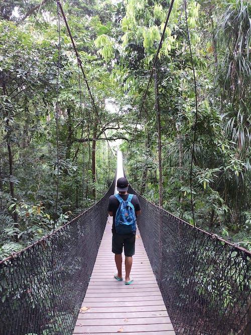 Kostnadsfri bild av äventyr, bro, djungel, gångbro