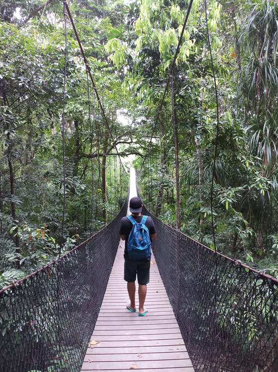 Man Walking on Hanging Bridge in Forest