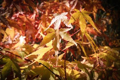 Ảnh lưu trữ miễn phí về chi nhánh, hình nền thiên nhiên, lá rơi, màu vàng