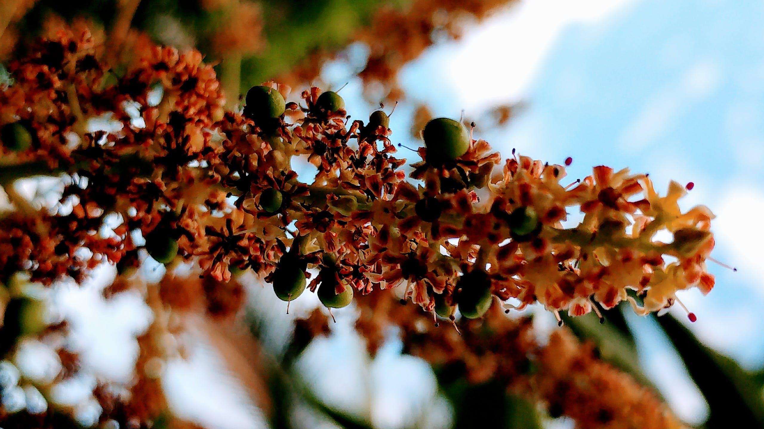 Shallow Focus of Yellow Flower Pollen