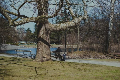 Free stock photo of city park, loneliness, quiet, tree