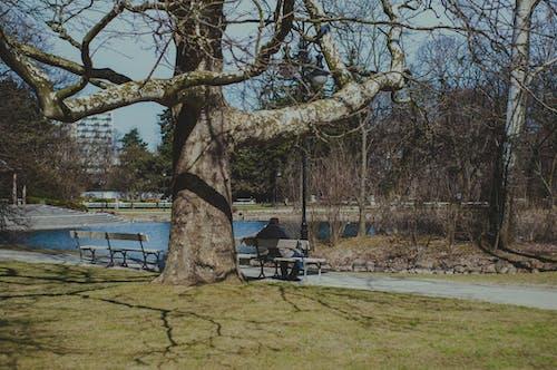 คลังภาพถ่ายฟรี ของ ความเหงา, ความโดดเดี่ยว, ม้านั่งไม้, สวนเมือง