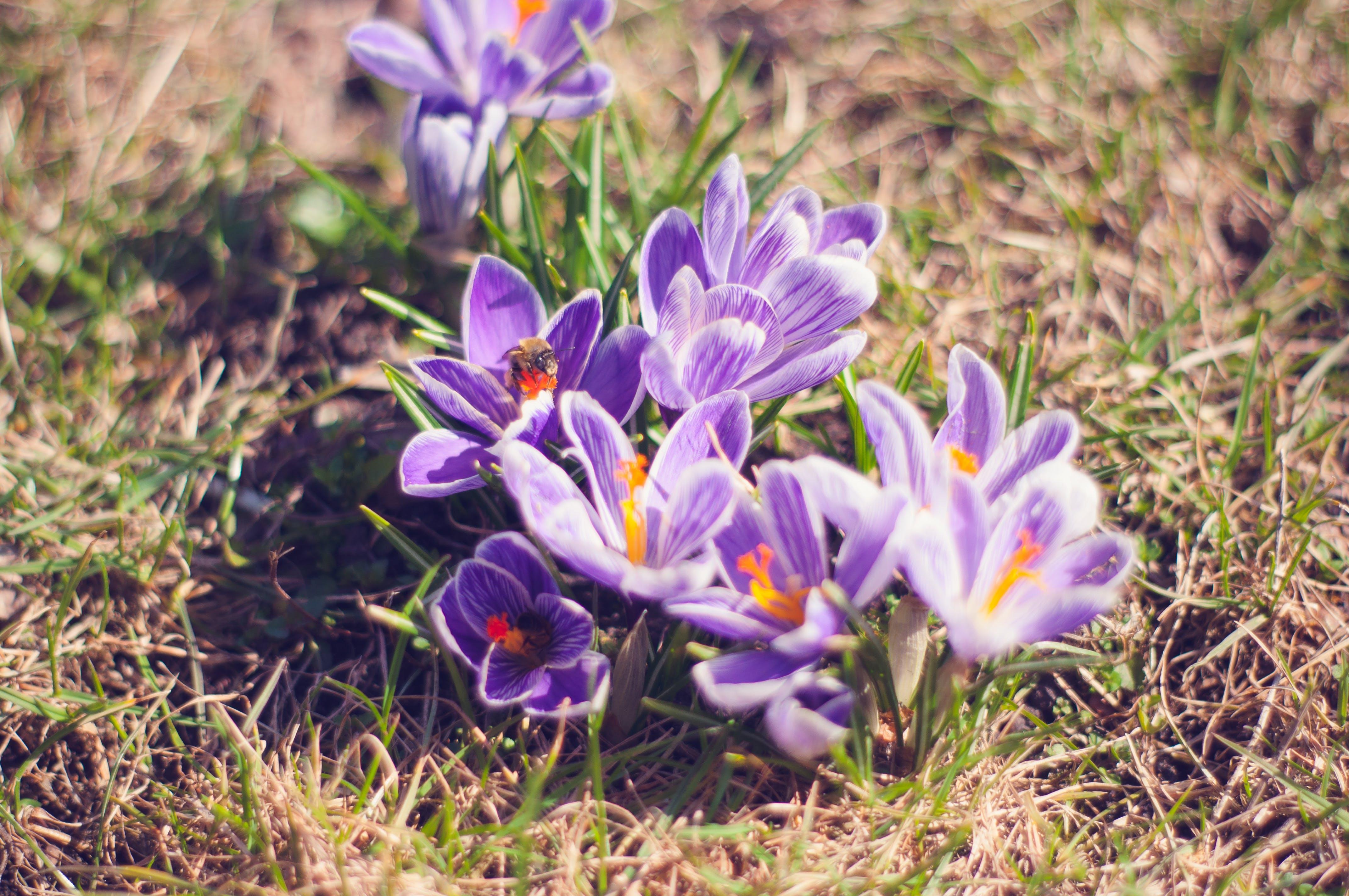 Gratis stockfoto met bij, bloeien, bloeiend, bloemblaadjes