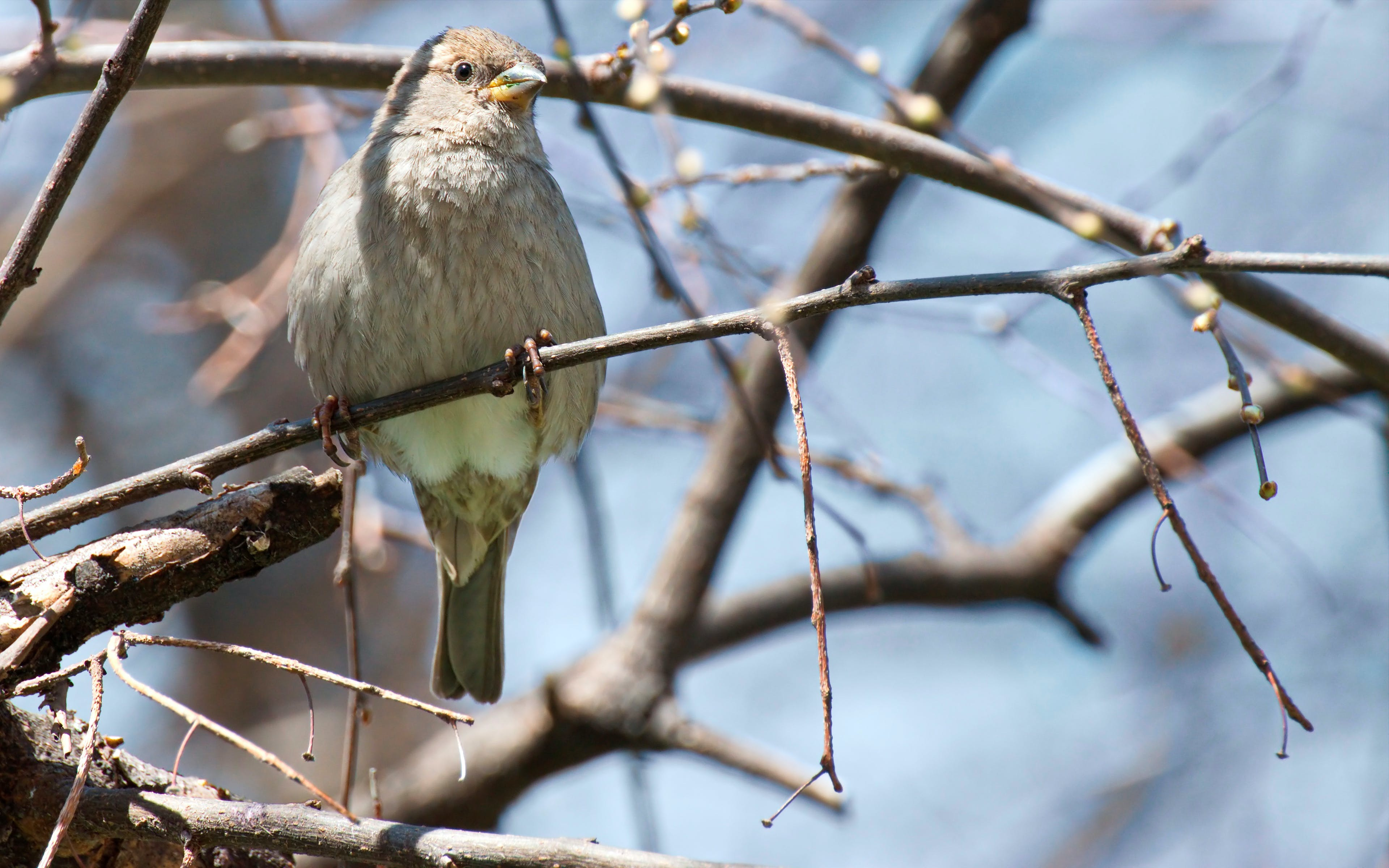 Close-up Photography of Gray Bird Perching on Twig