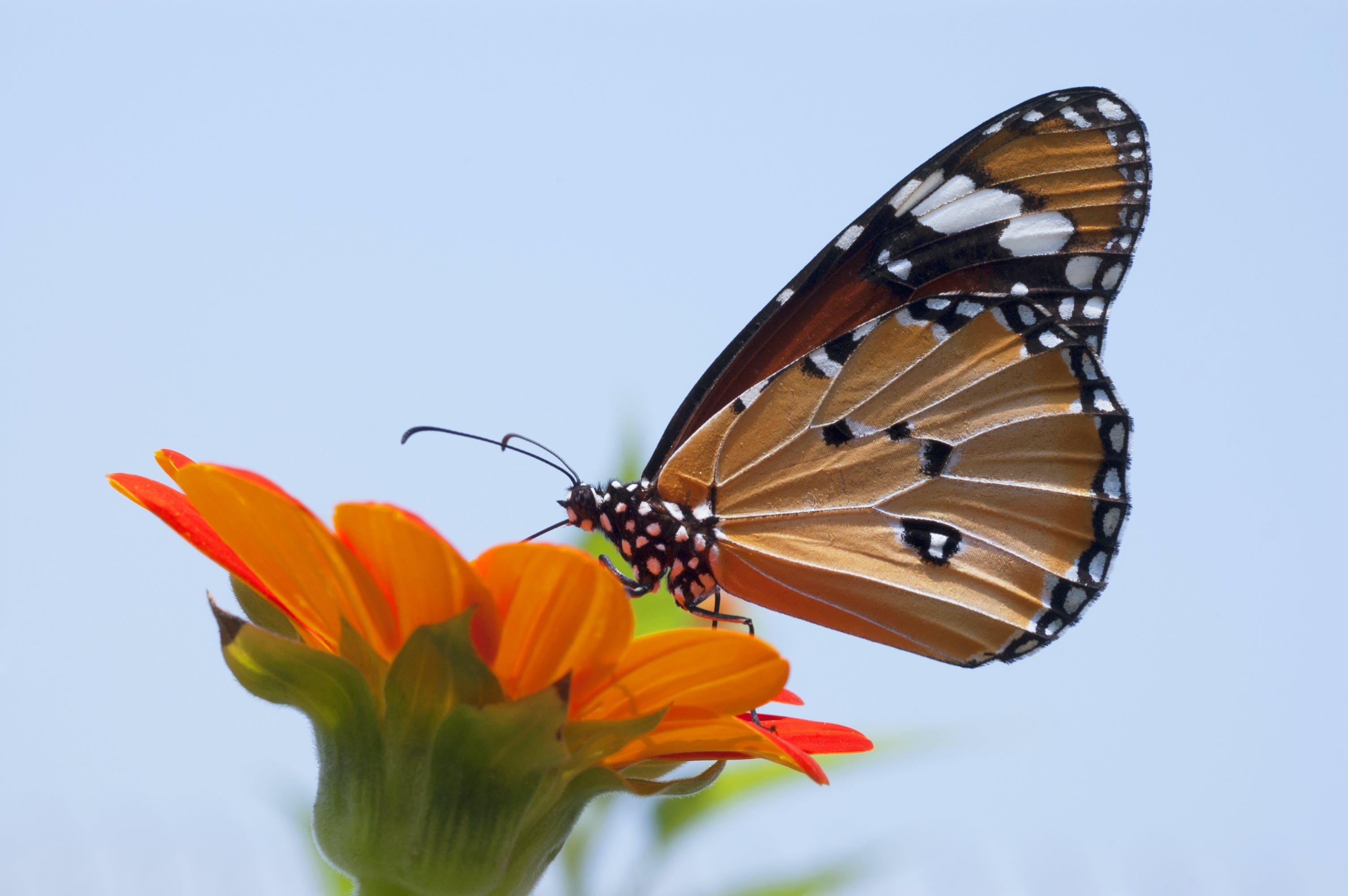 動物, 君主, 夏天, 天性 的 免费素材照片