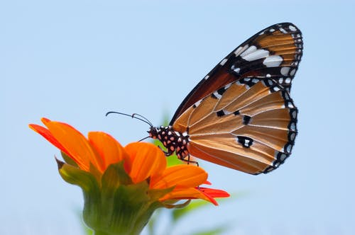 Close Up Photo of Monarch Butterfly on Top of Flower