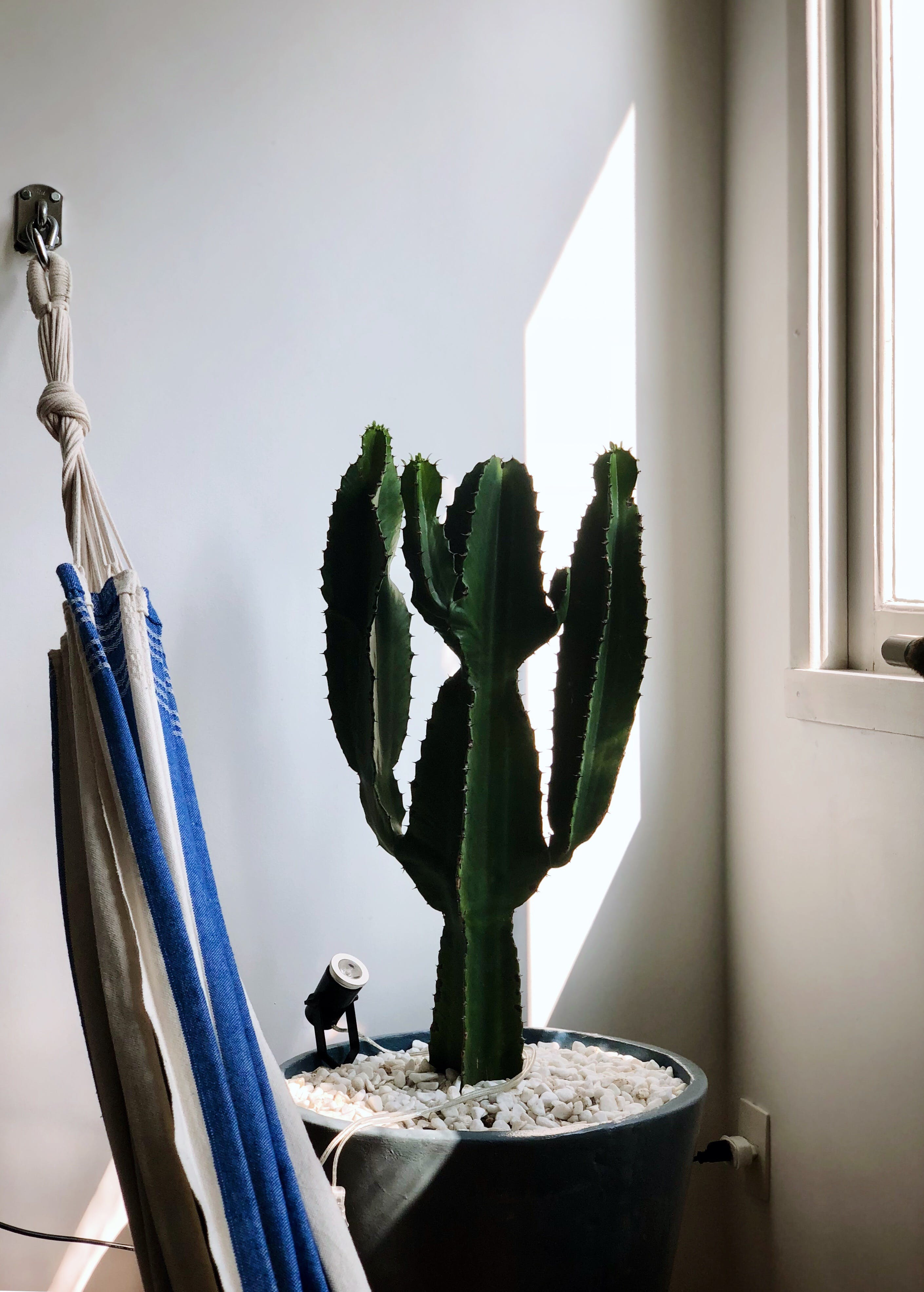 Green Cactus  Plant Near Window