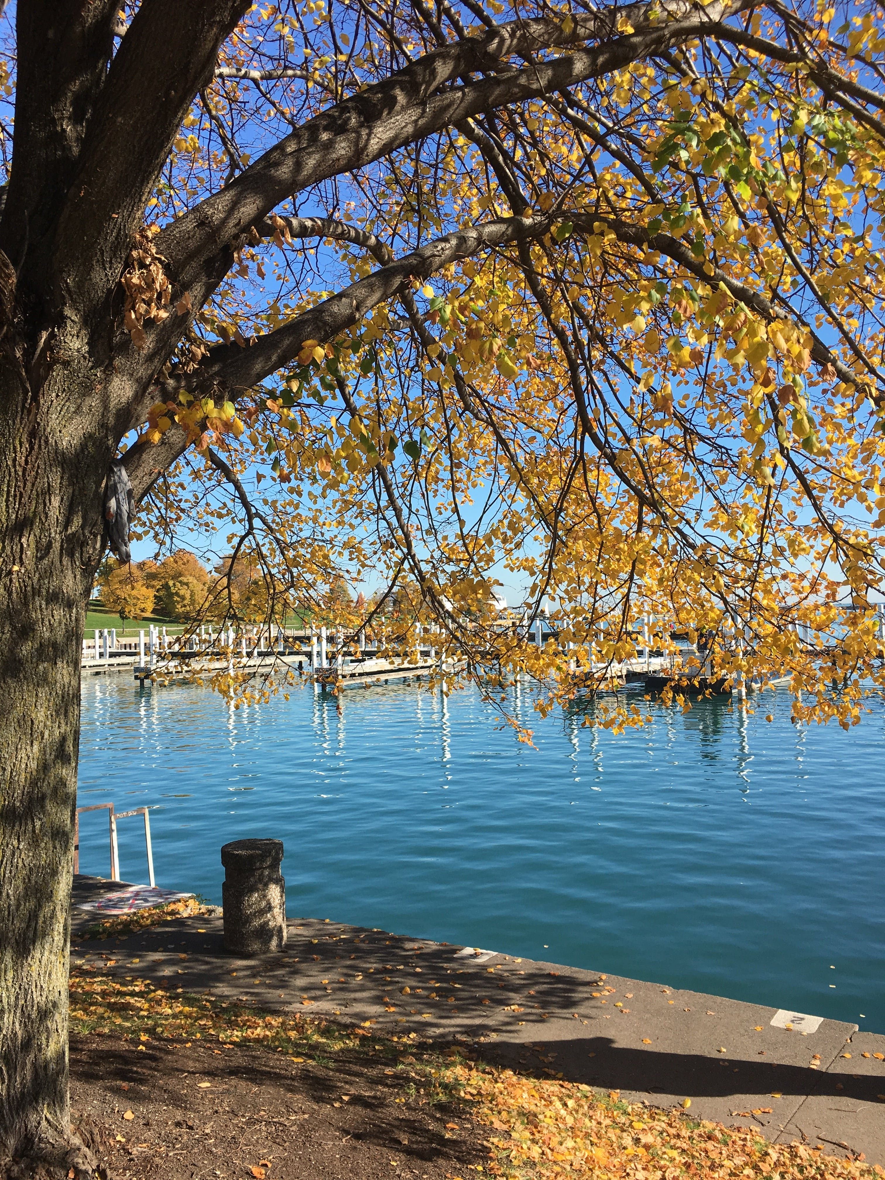 Yellow Leafed Tree Near Body of Water