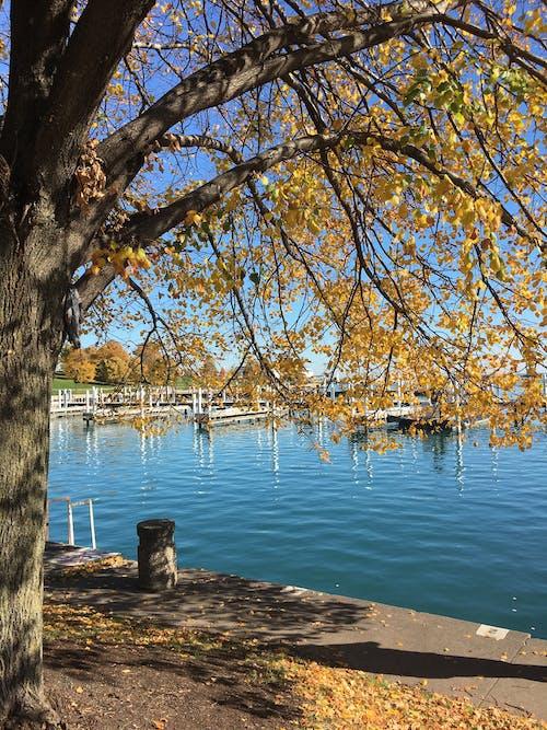 Fotobanka sbezplatnými fotkami na tému denné svetlo, farba, krajina, lakeshore
