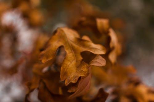Безкоштовне стокове фото на тему «дерево, клен, колір, коричневий»