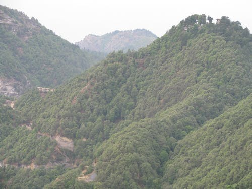 Free stock photo of greenery, Himachal, Mussoorie