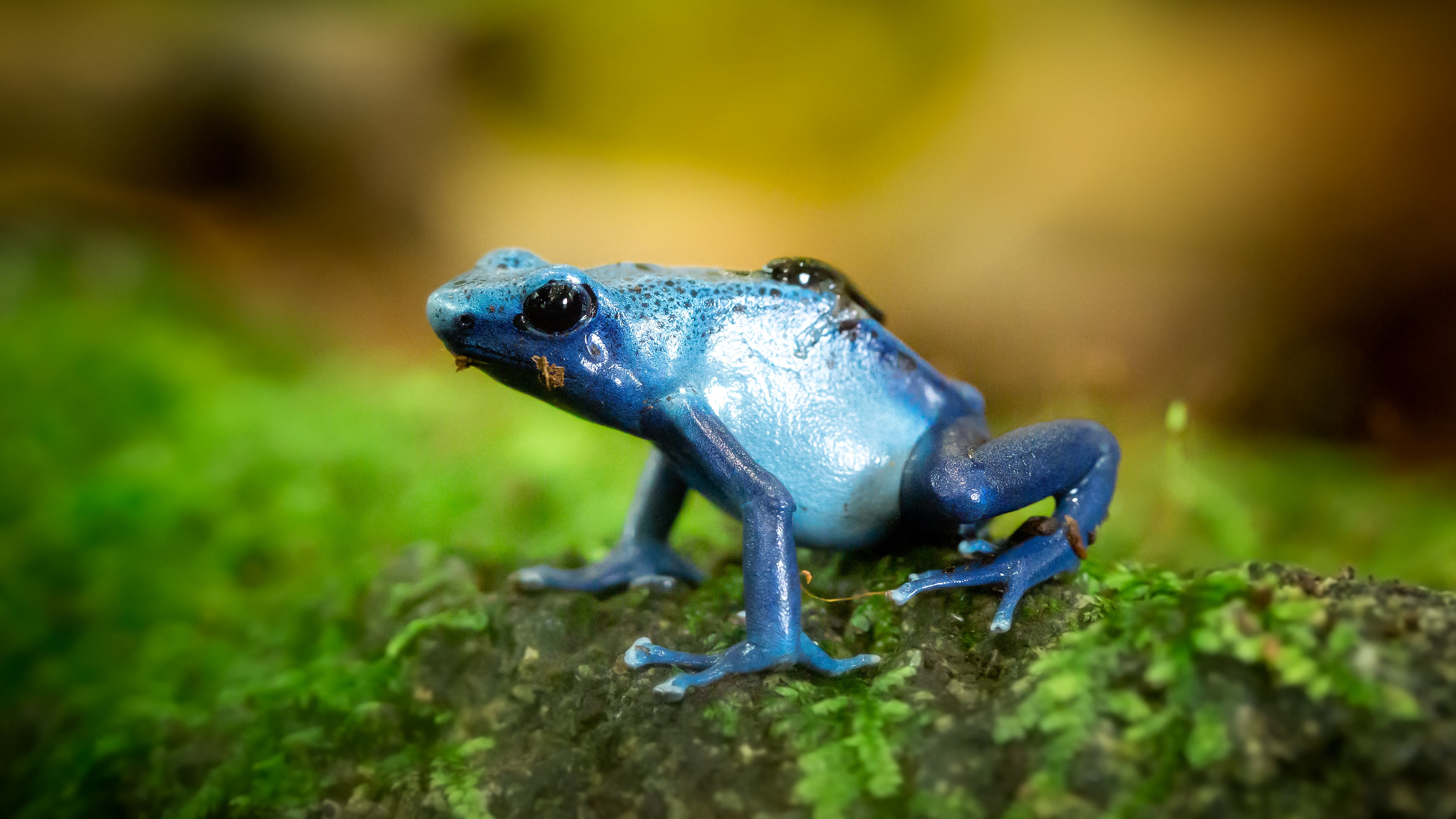Closeup Photo of Blue Frog on Green Surface