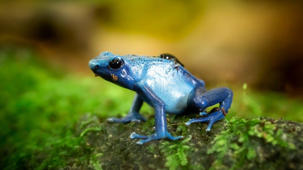 Frog @pexels.com