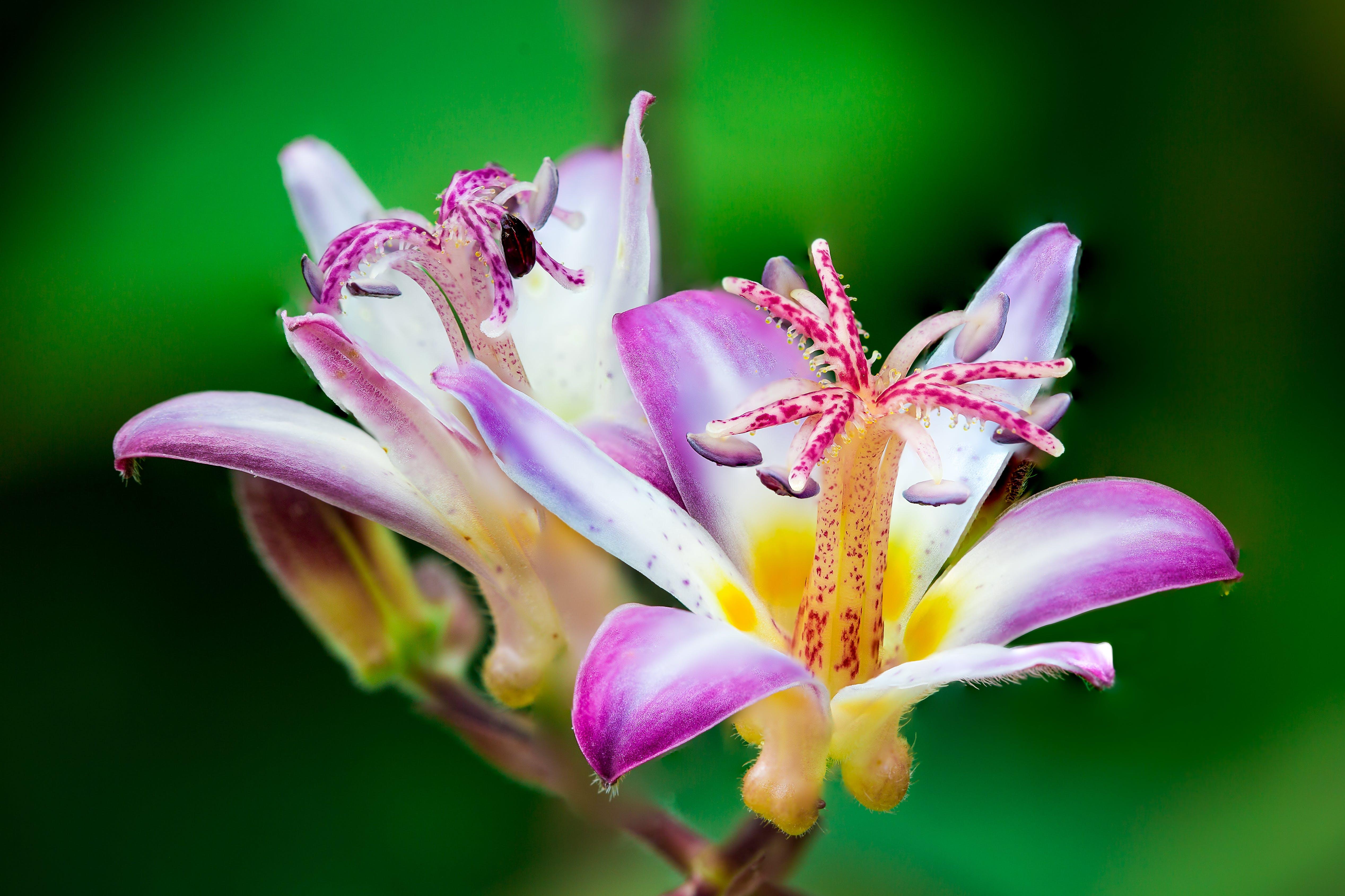 Closeup Photo of Purple-and-white Petaled Flowers