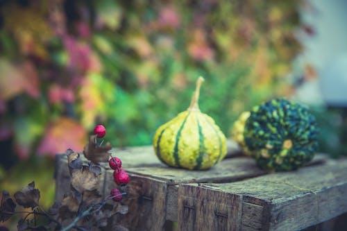 健康, 南瓜, 戶外, 漿果 的 免費圖庫相片