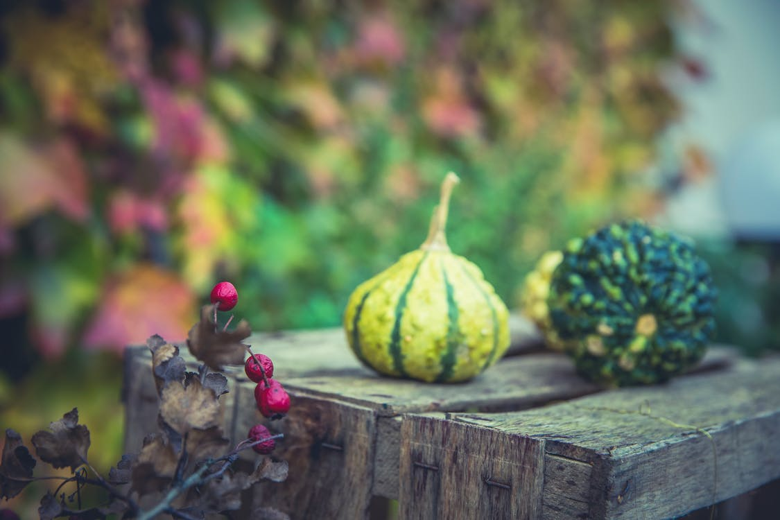 autumn, berries, food