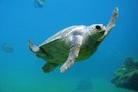 animal, reptile, underwater