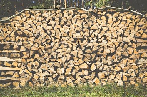 Foto d'estoc gratuïta de fusta, llenya, tions, troncs de fusta