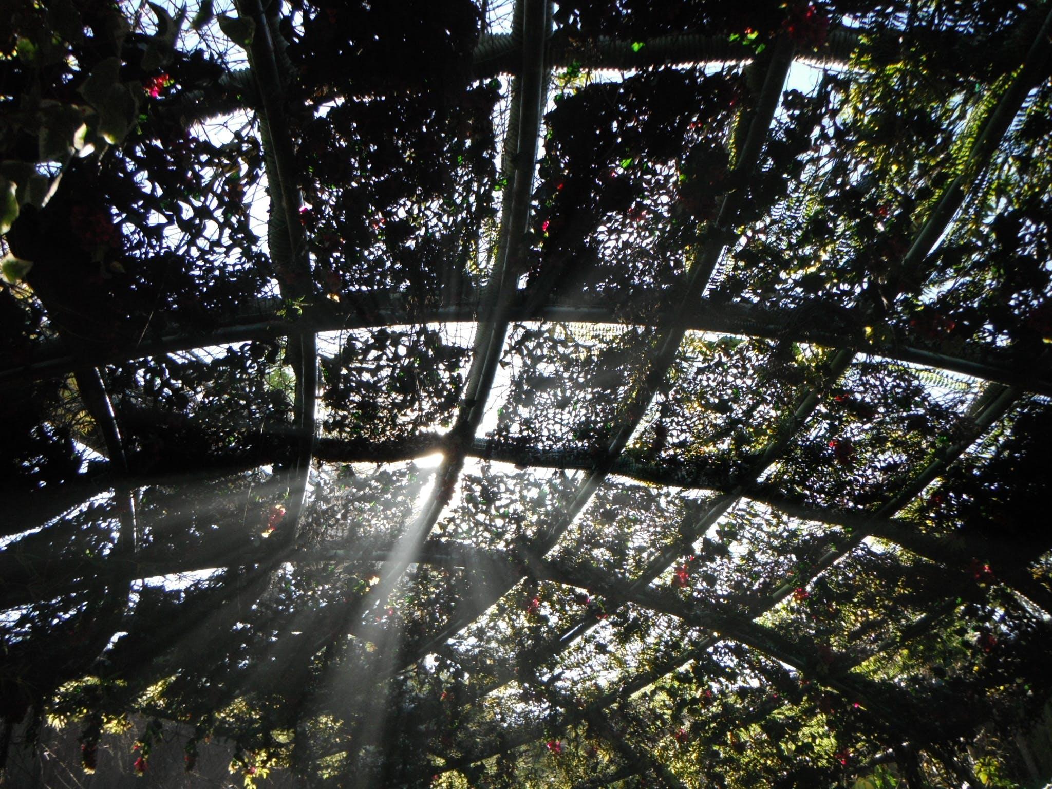 Free stock photo of jurassic park