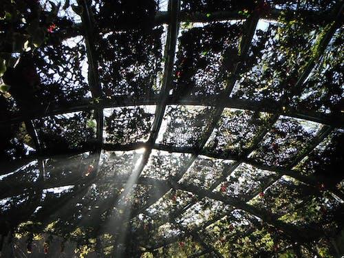 쥬라기 공원의 무료 스톡 사진