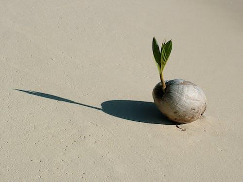 코코넛의 무료 스톡 사진