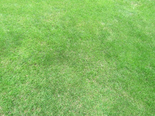 Free stock photo of lawn