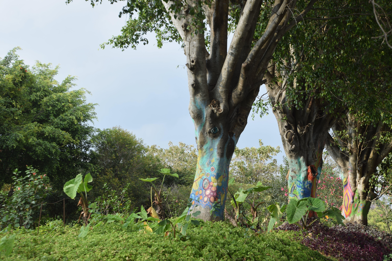 Free stock photo of park, eye, painted tree