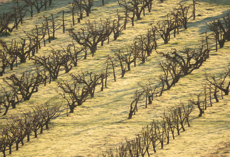 Free stock photo of Dormancy, orchard